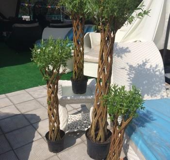 Ива плетеная (датские корни) 60 см