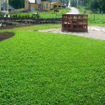 Рулонные газоны и газонная трава