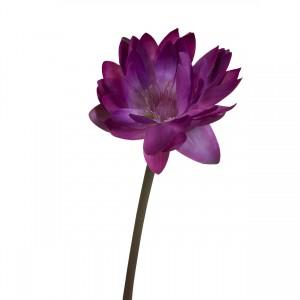 Водяная лилия пурпурно-красная