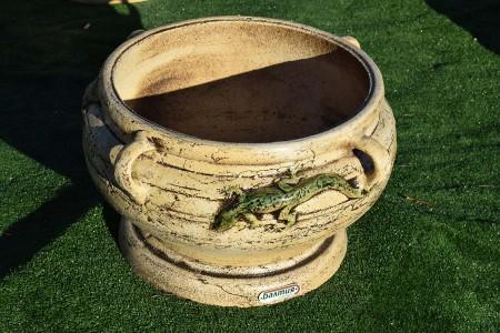 Керамический вазон «Котёл» с ящерицей