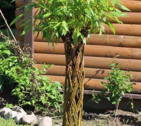 Ива плетеная (датские корни) 150 см